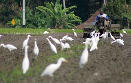 Desa Wisata Ketingan sewa mobil yogyakarta