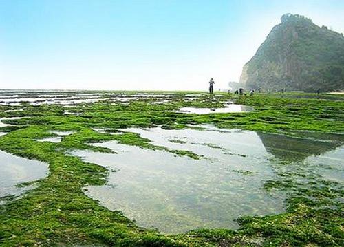 Pantai Ngobaran sewa mobil yogyakarta