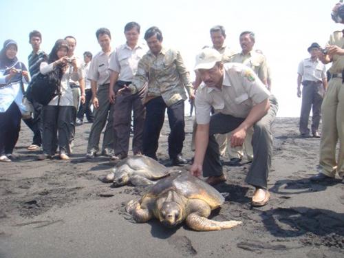 Wisata Yogyakarta Pantai Samas