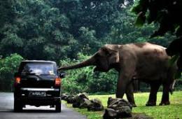 Taman Safari Indonesia II Prigen